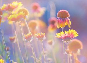 Optimize Your Health with Better Sleep - Linden Botanicals (www.lindenbotanicals.com)