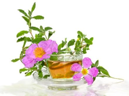 Cistus incanus tea / Cistus tea / Rock Rose tea (www.LindenBotanicals.com)