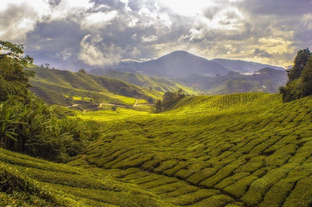 Good Mood Tea: Find Your Om! (Linden Botanicals)