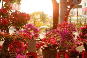 Herbal Education - Linden Botanicals