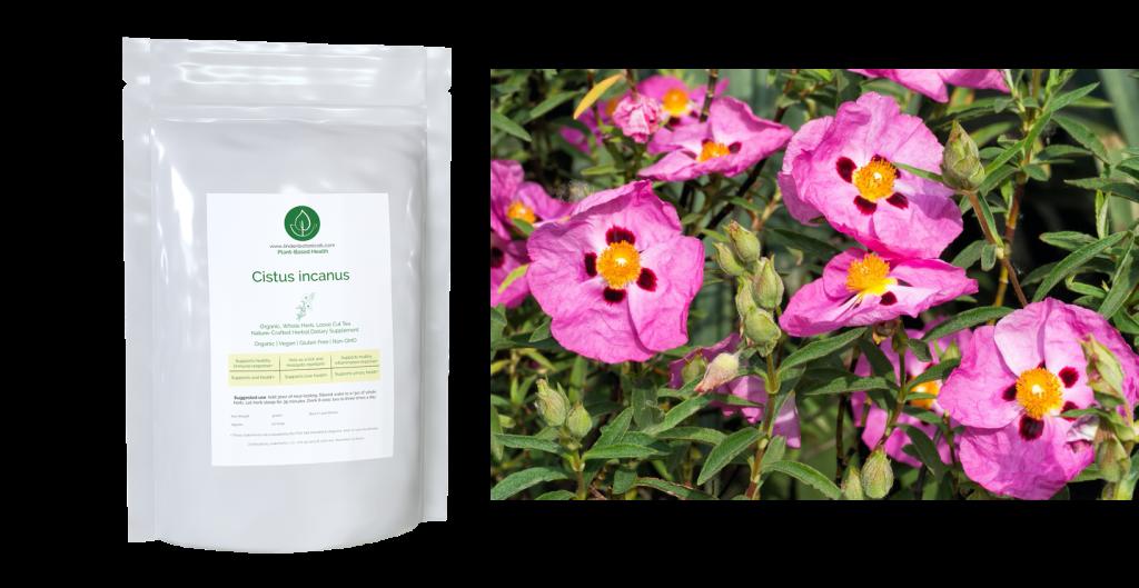 Cistus Brewing - Cistus incanus Herbal Tea - Linden Botanicals