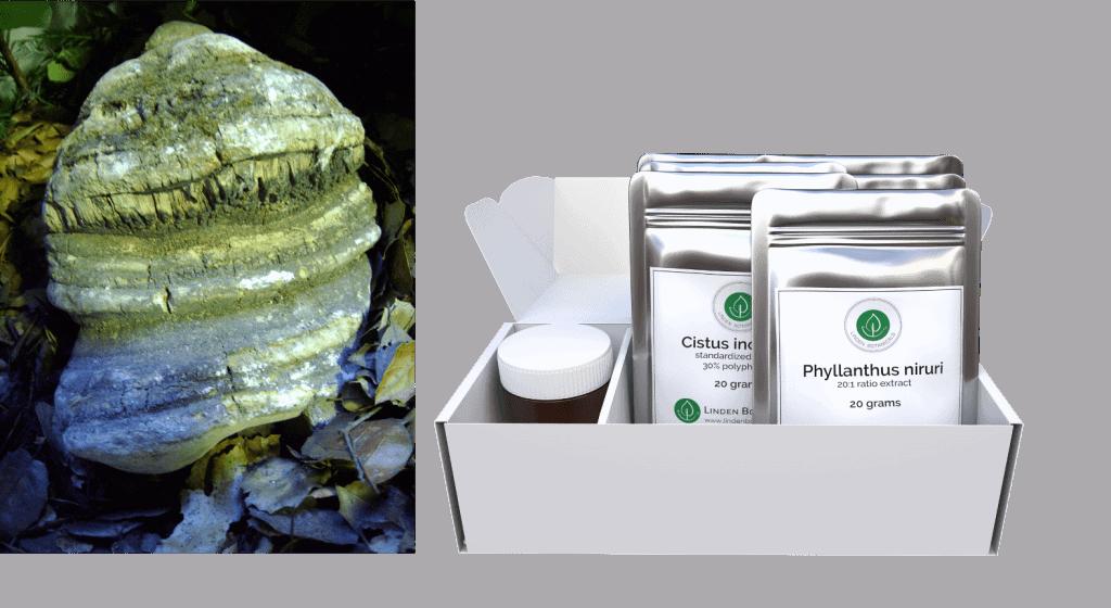 What is Agarikon Mushroom - Laricifomes officinalis - ShieldsUp Immune Support Kits - Linden Botanicals