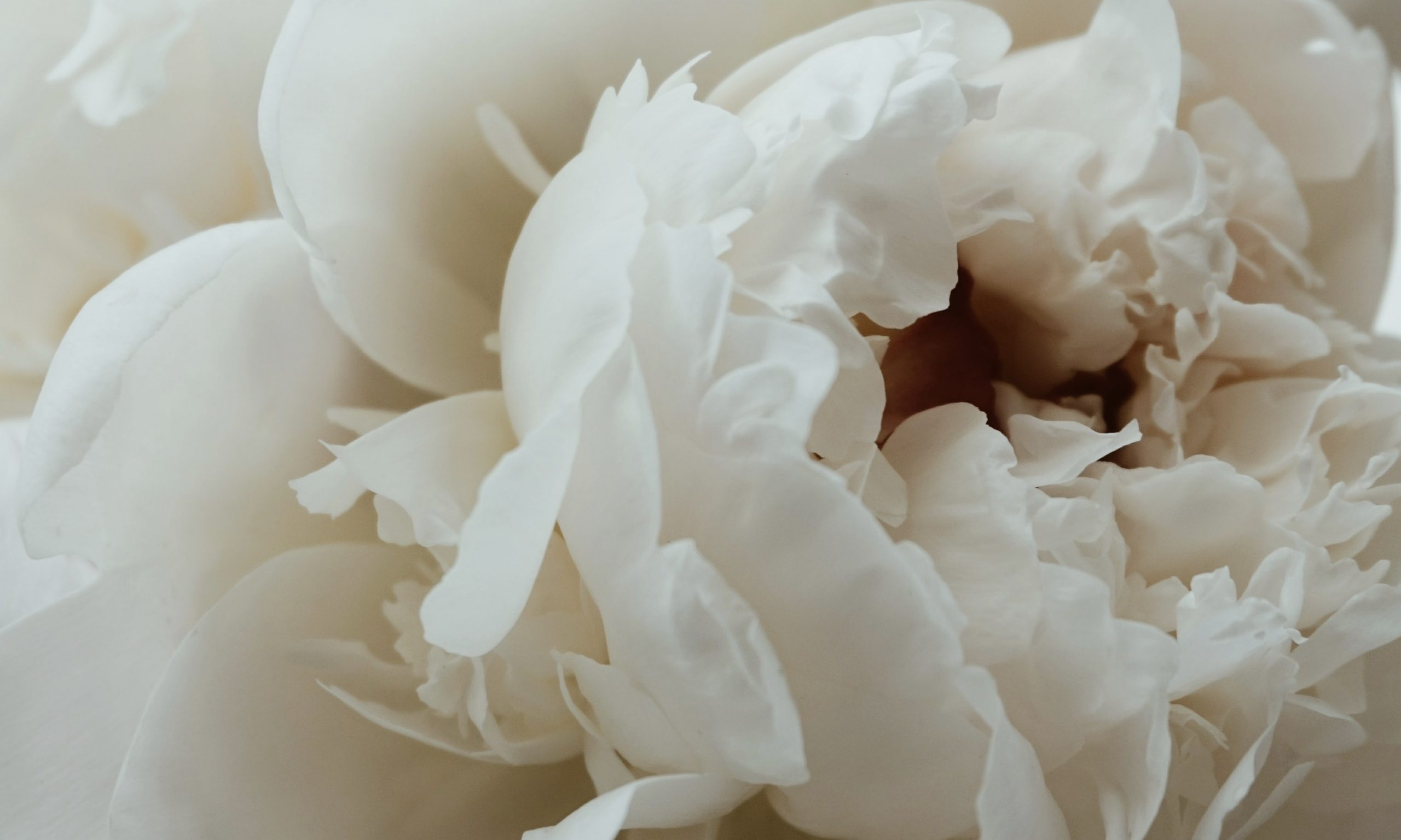 natural anti inflammatory - Paeonia lactiflora - White Peony extract - Linden Botanicals