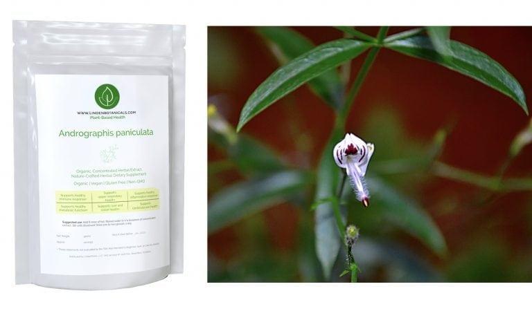 Andrographis paniculata - Linden Botanicals