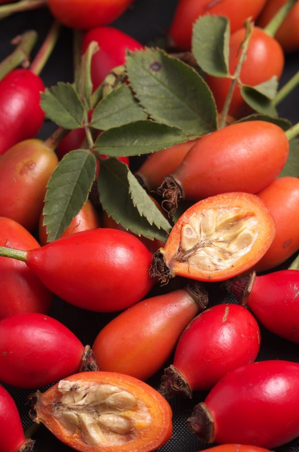 best rosehips extract lindenbotanicals