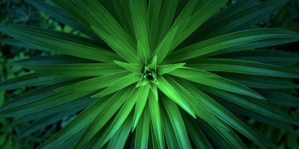 Linden Botanicals - Energetics